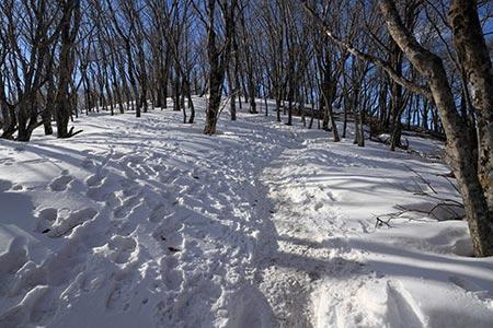 ミズヒノ頭付近の登山道
