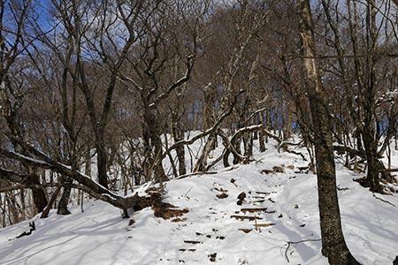 鍋割山稜の登山道