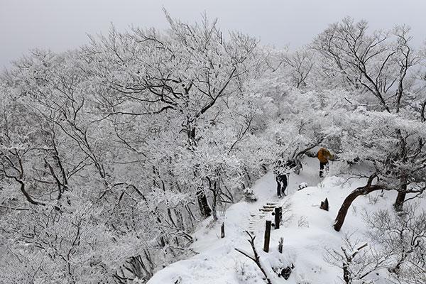 霧氷のついた登山道を行く